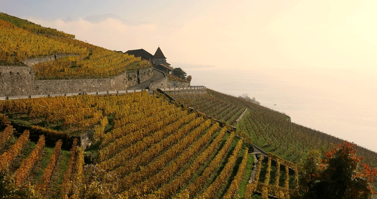 Lavaux Weinberge & Lac Leman