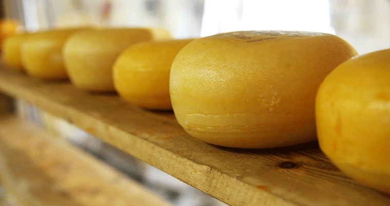 Käse Cheese Fromage